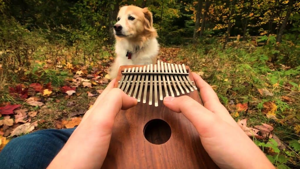 What is kalimba
